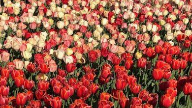 Photo of Roma Flowers Park: coreografie floreali e molto altro al Divino Amore